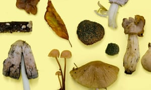 The summer truffle (centre) is a prized find in British woodlands.
