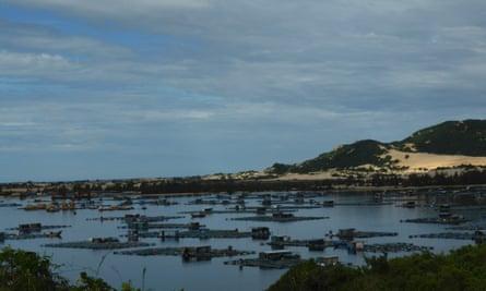 Vietnamese shrimp farms