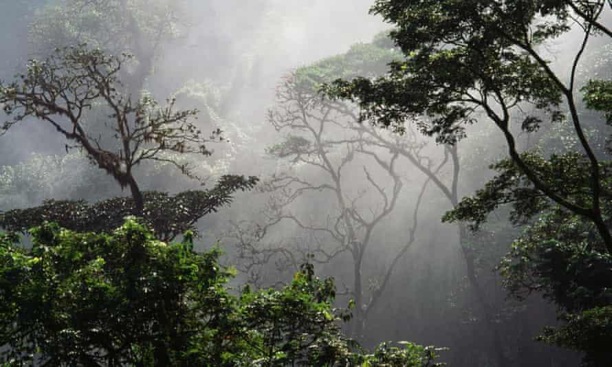 Rainforest, near Nkongsamba, Littoral region, Cameroon, 15 June 2014.