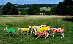 Sheep sprayed in the colours of the Tour de France winners' jerseys in Yorkshire in July 2014