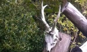 More animal skulls