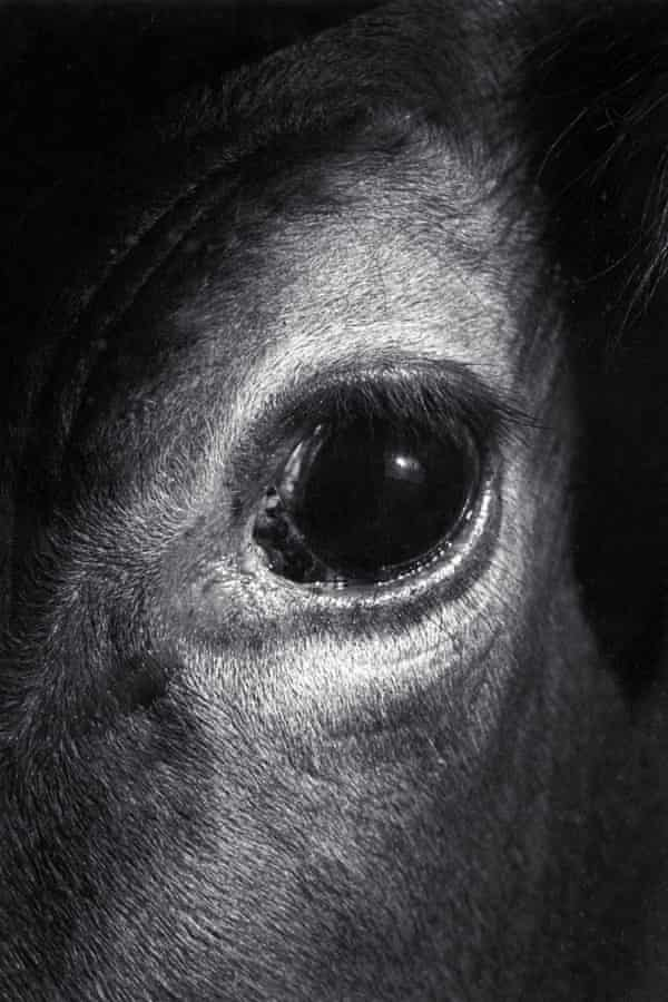 The eloquent close-up Bown took of of a cow's eye when she discovered her calling.