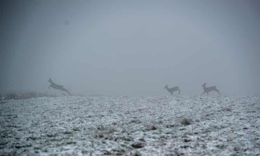 """Poland,MAJDAN SOPOCKI the first,06.12.2014, deer on the field next to """"Majdan Sopocki one"""" PGNiG/ Chevron  drilling rigCommissioned for FOREIGN NEWS re. shale fracking"""