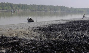 A Bangladeshi villager walks past oil-covered vegetation on the banks of the Shela River after an oil-tanker carrying 350,000 litres of furnace oil collided with another vessel in Mongla on December 14, 2014. A dead dolphin has been found in Bangladesh's protected Sundarbans delta following an oil spill which has spread over several hundred square kilometres, heightening fears for the area's rare wildlife.