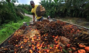Demand for sustainable palm oil rises
