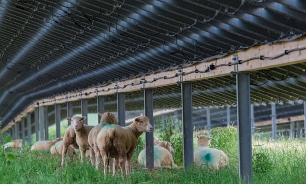 [Video] Quá trình xây dựng solar farm Landmead 46MW