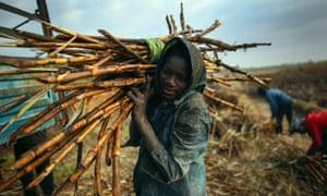 Sugar cane harvesters in Mali