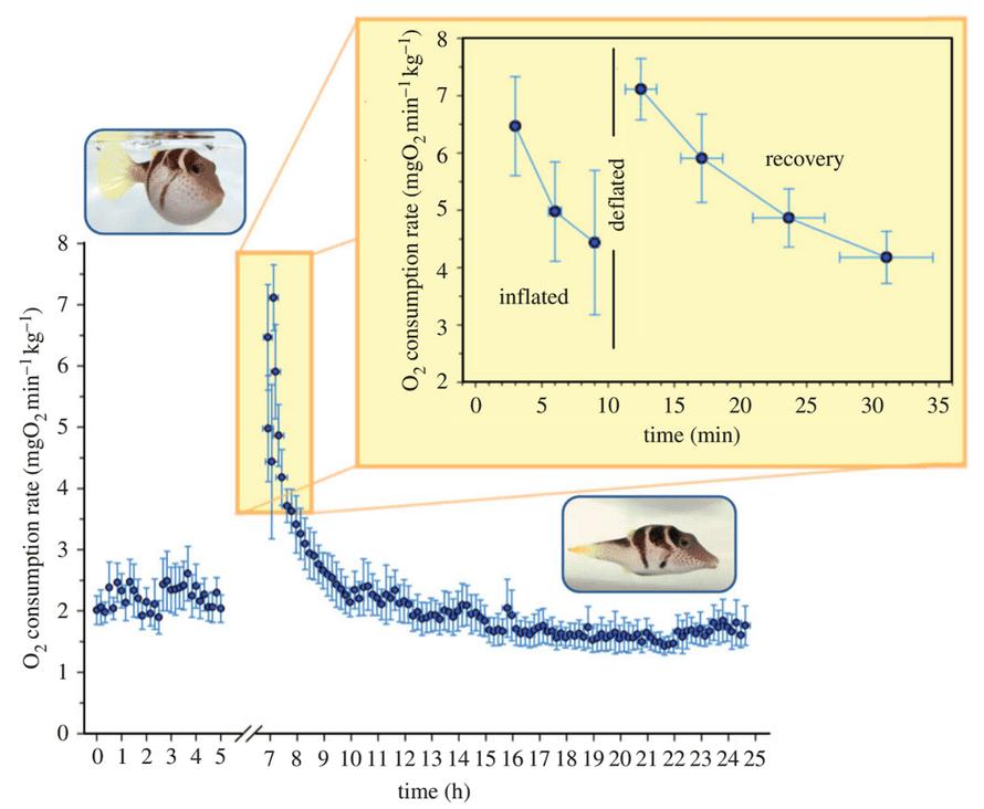 pufferfish inflation data
