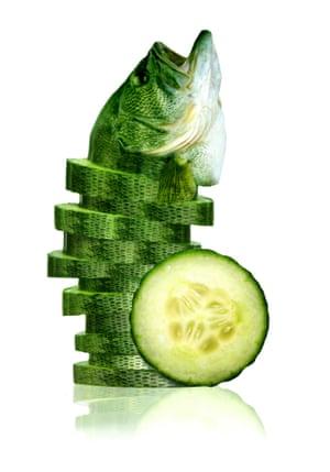 Sarah DeRemer Sea Cucumber
