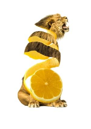 Sarah DeRemer Limon