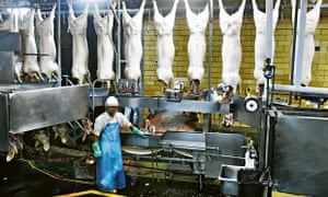 On the line: inside the Hormel pork processing plant in Fremont, Nebraska.
