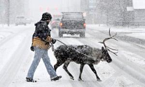 Reindeer crossing street
