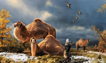 This undated artist's interpretation provided by the Nature website shows the High Arctic camel on Ellesmere Island during the Pliocene warm period, about 3.5 million years ago. Arctic temperatures were much higher than today's during the mid-Pliocene and mid-Miocene despite similar atmospheric CO2 levels.