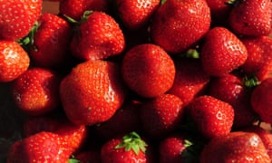 Pick your own strawberries to take back in the car with you.