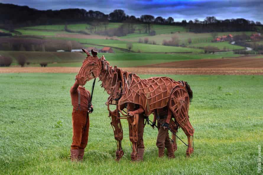 Joey in Flanders fields
