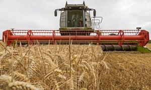 Wheat harvest, Northamptonshire
