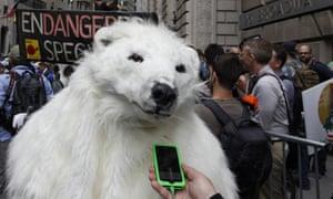 polar bear iphone