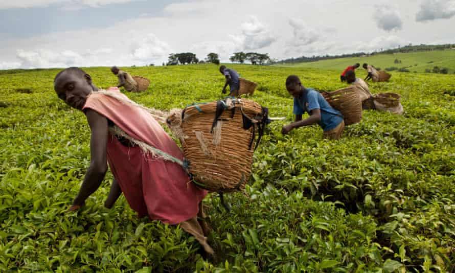 uganda trade