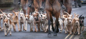 The hounds of the Heythrop Hunt