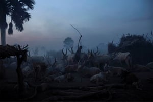 A South Sudanese man from the Dinka ethnic group stands among cattle Yirol on 12 February 2014.
