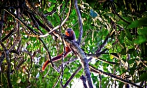 Scientists discover new species of monkey in western Brazil