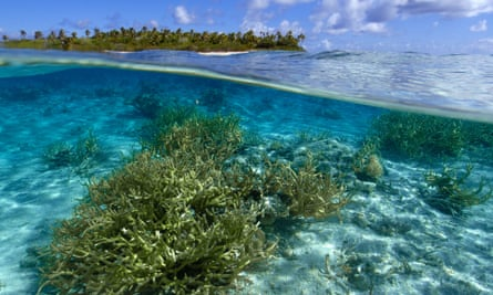 Staghorn coral in the Pacific