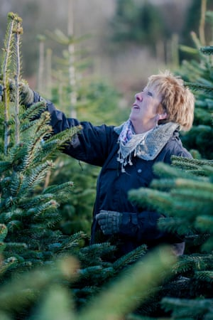 Woman chooses a christmas tree in south wales