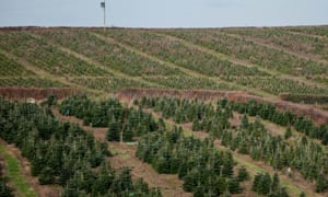 christmas tree plantation in south wales