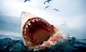 A great white shark – now an endangered species.