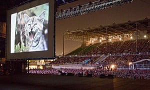 Glasgow to host festival of cat videos | UK news | The Guardian