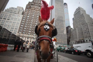 New York horse carriage.