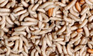 Brown Close up Closeup Full frame Maggot Maggots