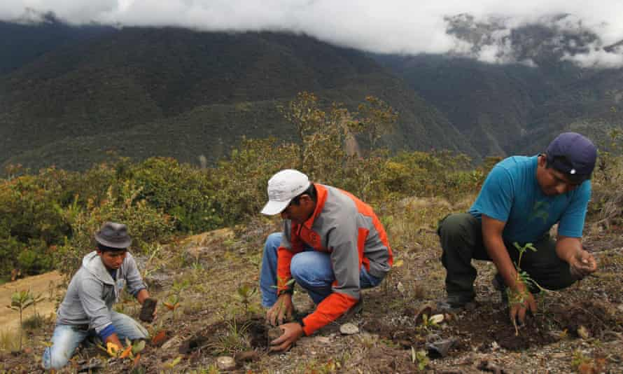 Workers plant seedlings for reforestation at Huayquecha Biological Station near Paucartambo, Cusco December 5, 2014. The seedlings will mature into trees, as part of environmentally-friendly reforestation programmes promoted by the Amazon Conservation Association (Asociacion para la Conservacion de la Cuenca Amazonica, ACCA).
