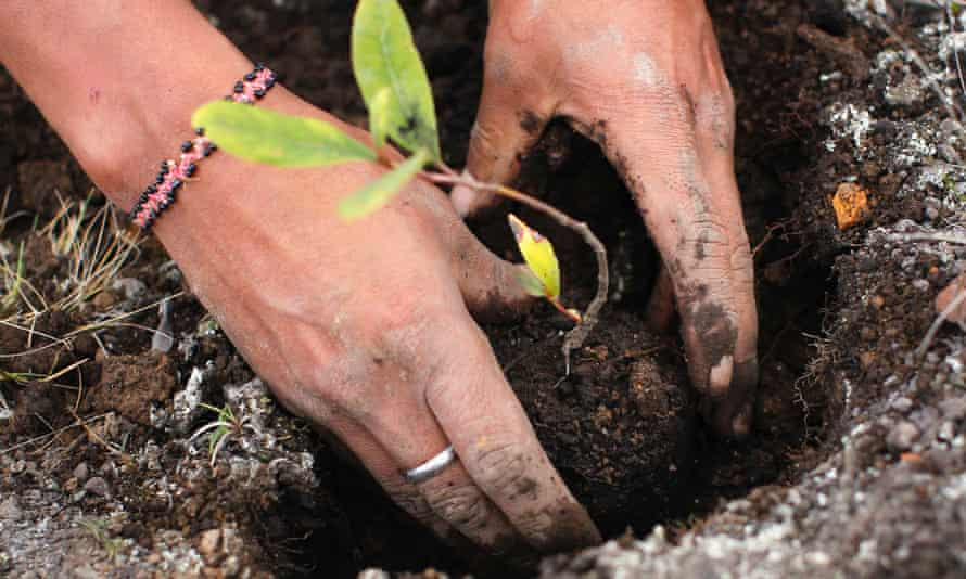 A worker plants seedlings for reforestation at Huayquecha Biological Station near Paucartambo, Cusco December 5, 2014. Locals farming in areas of the Peruvian rainforest commonly burn fields to improve soil quality, which create carbon dioxide emissions that may harm the environment.