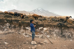At the foothill a young shepherd is looking after sheep. Most grazing is done in semi-dry regions of the mountains and about 35% of the total land area is used forgrazingand small fodder production.