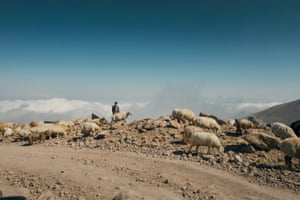 Sheep are seen being herded everywhere in the mountains. The plateaus lying above 3,000 feet (900 metres) are covered by brown or chestnut-coloured soil that supports grassy vegetation.