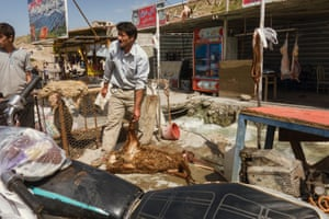 The water is used to ensure the sheep are clean when being butchered. Iran's agricultural sector is subject to changes in rainfall, and although the government has attempted to reduce this dependence through the construction of dams, irrigation and drainage networks, agriculture remains highly sensitive to climate developments.