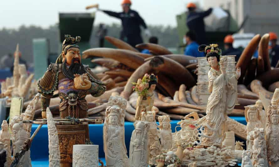 Workers, background, destroy confiscated ivory in Dongguan, southern Guangdong province, China, Monday, Jan. 6, 2014.