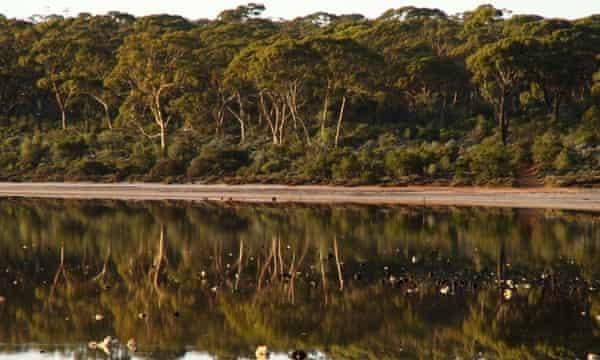 Great Western Woodlands in Western Australia