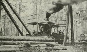 logging longleaf
