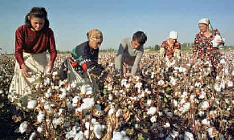 Crop of cotton in Uzbekistan