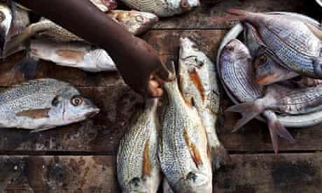 Fish sale Senegal
