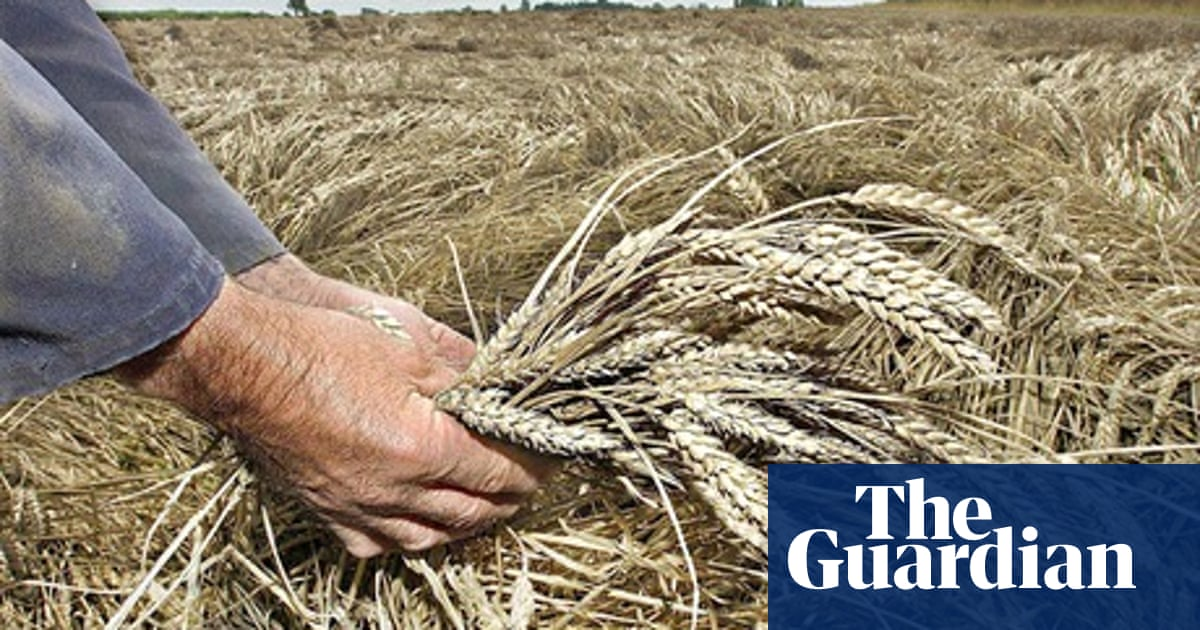 Farmers are growing more biotech crops than ever, report reveals