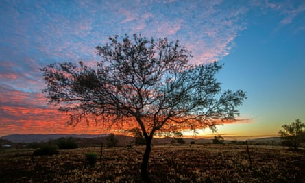 Sunset tree in the Australian outback.