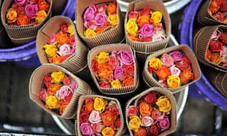 Roses Kenya