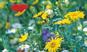 Alys Fowler Sowing Wildflowers Life And Style The Guardian