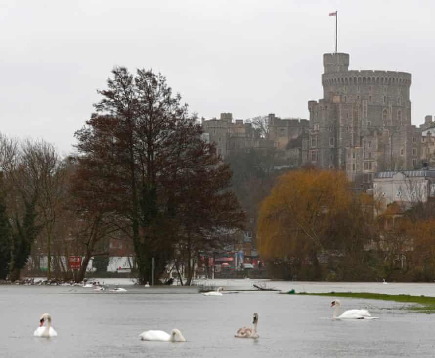 Swans swim over Thames-flooded meadows beneath Windsor Castle.
