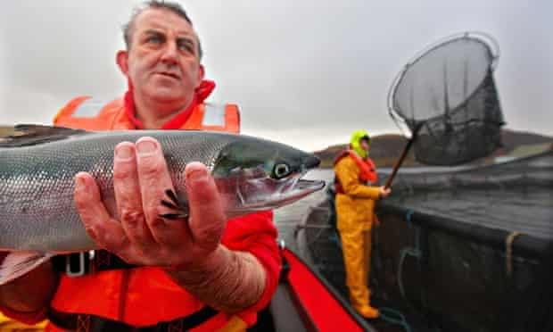 A salmon farmer holds a fish in Oban