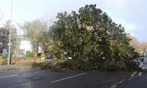 Southampton storm damage