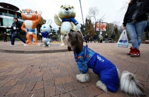 A dog dressed in the colours of the 2014 Sochi Winter Olympics sits near the Olympic mascots.